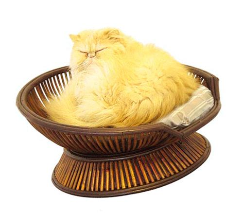кошки фото в стиральной машине