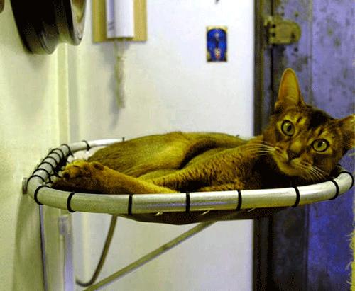 лежанка для кота своими руками